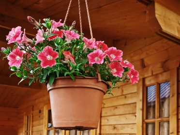 How to Grow Your Own Flowers