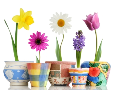 How to Grow Your Own Flowers3