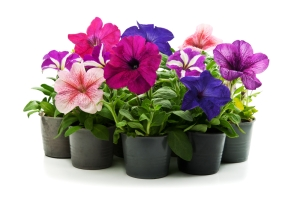 How to Grow Your Own Flowers4