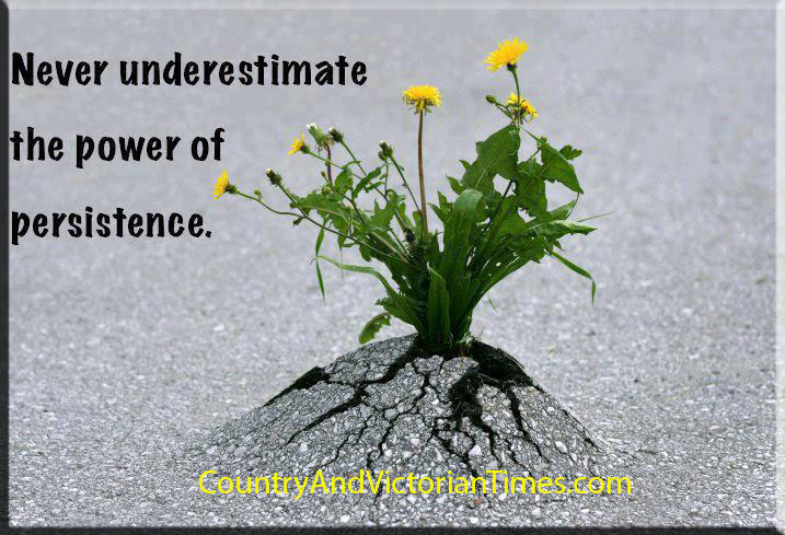 power ofpersistence weed dandilion tar asphalt road growing through conquering