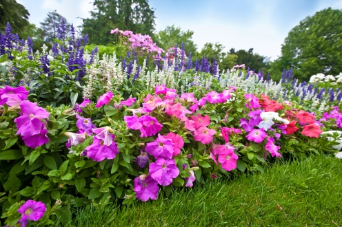 What Perennial Flowers to Put in Your Spring Garden