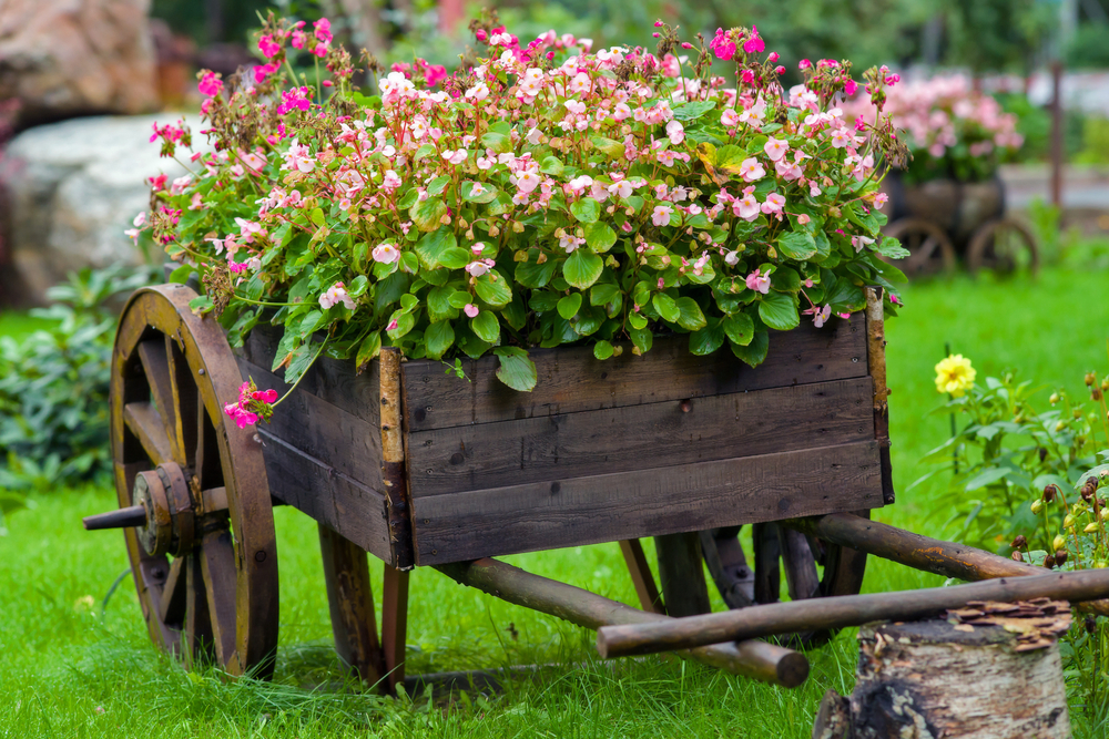 What perennial flowers to put in your spring garden by for Things used for gardening