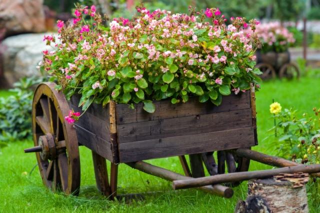 What Perennial Flowers to Put in Your Spring Garden3