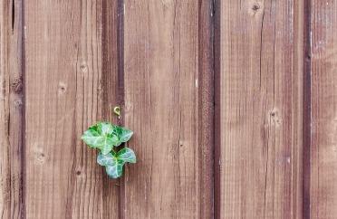 wood-482288_960_720