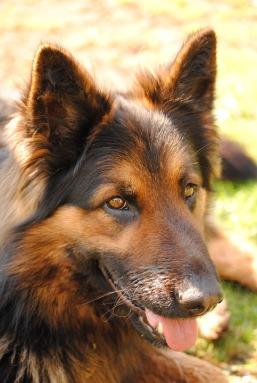 dog-2092903_960_720